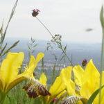 Kő-hegyi virágok közt jógáztunk